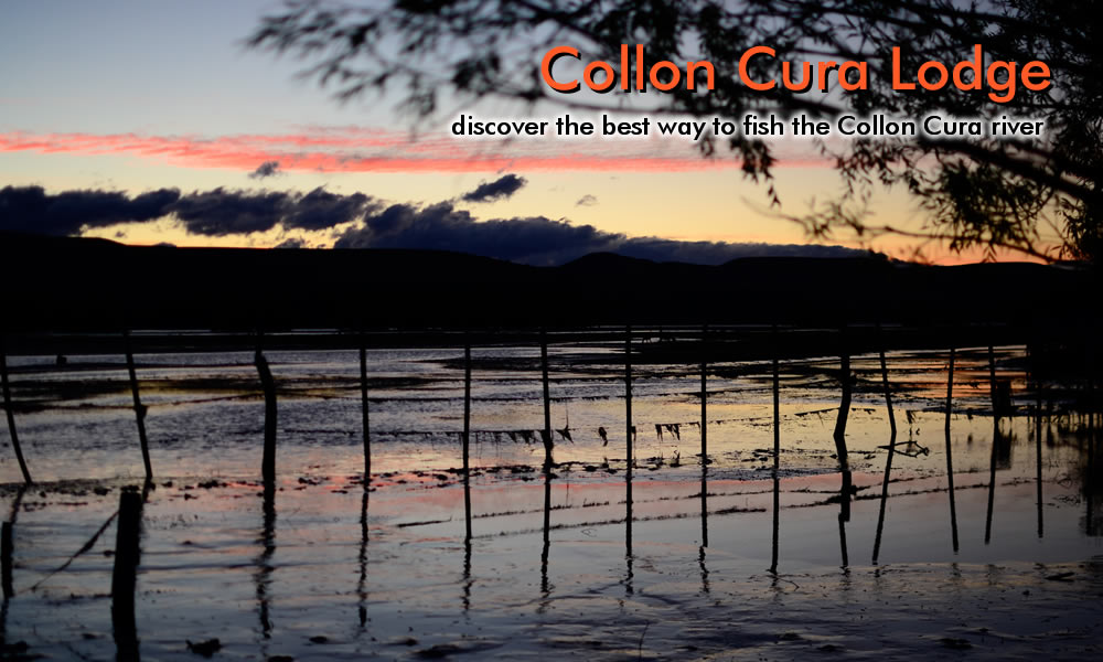 photo collon cura river big brown trout